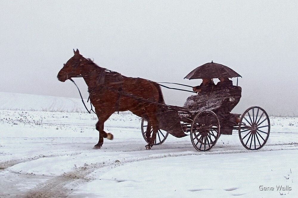 Amish Drive-By by Gene Walls