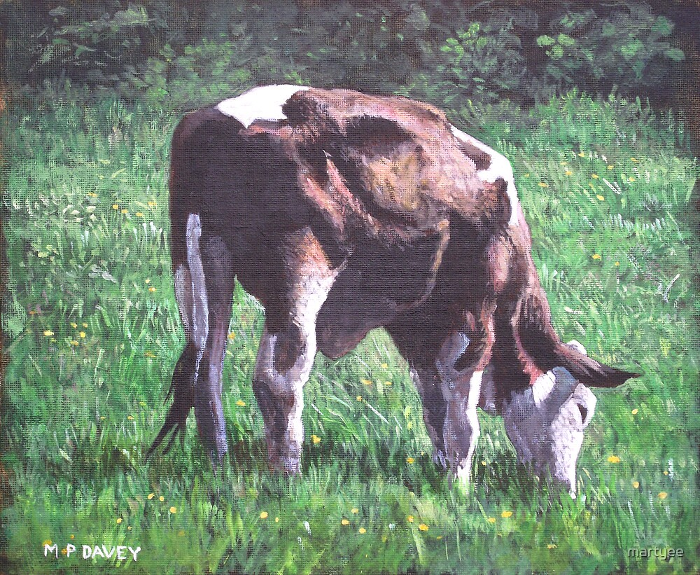 brown and white cow eating grass by martyee