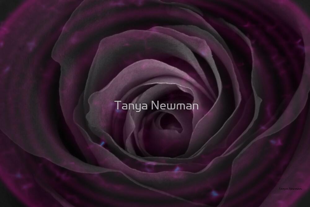 Rosenova by Tanya Newman
