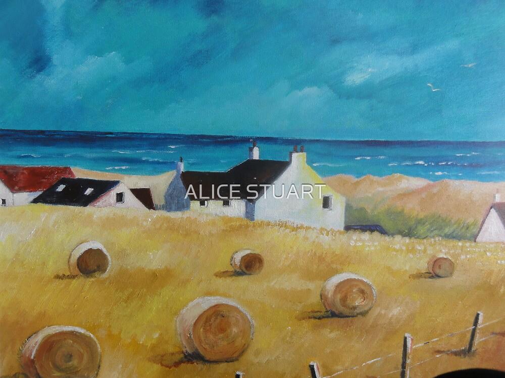 Balmedie Cottages by ALICE STUART