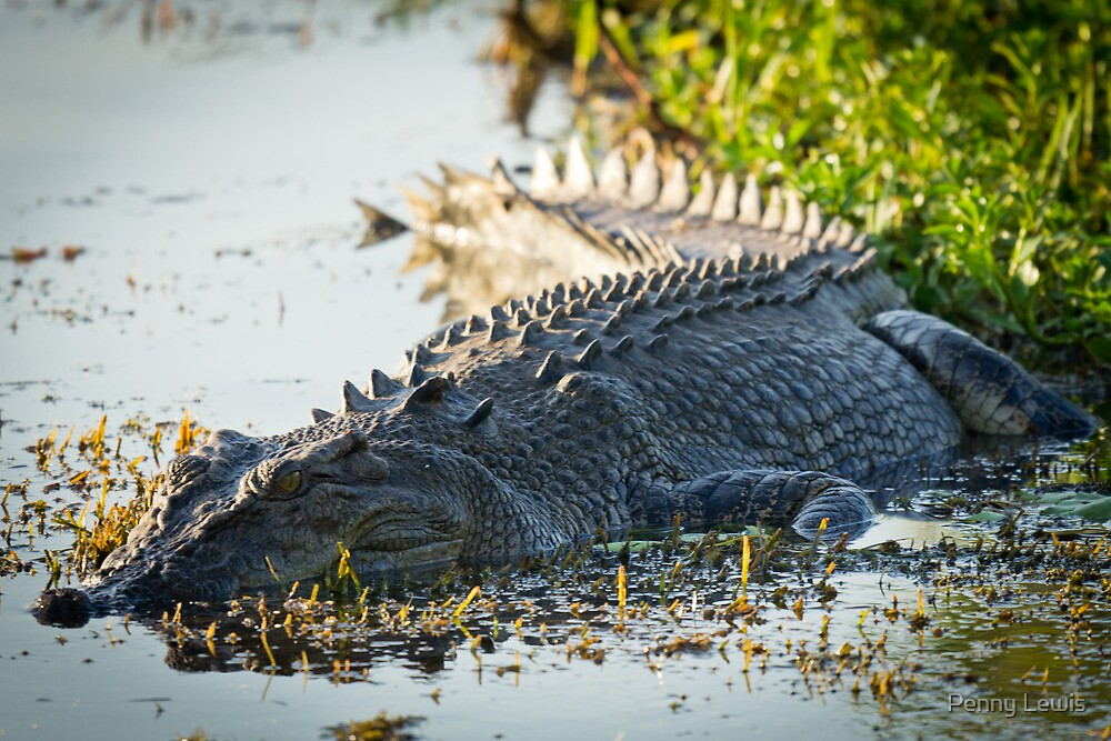Kakadu Croc by Penny Lewis