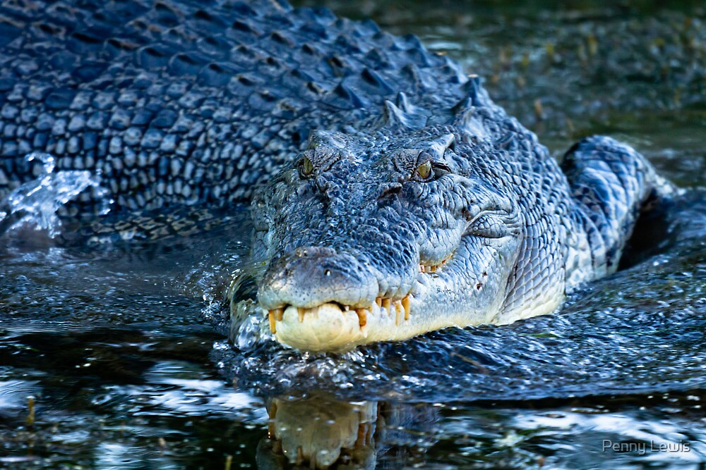 Crocodile Smile by Penny Lewis
