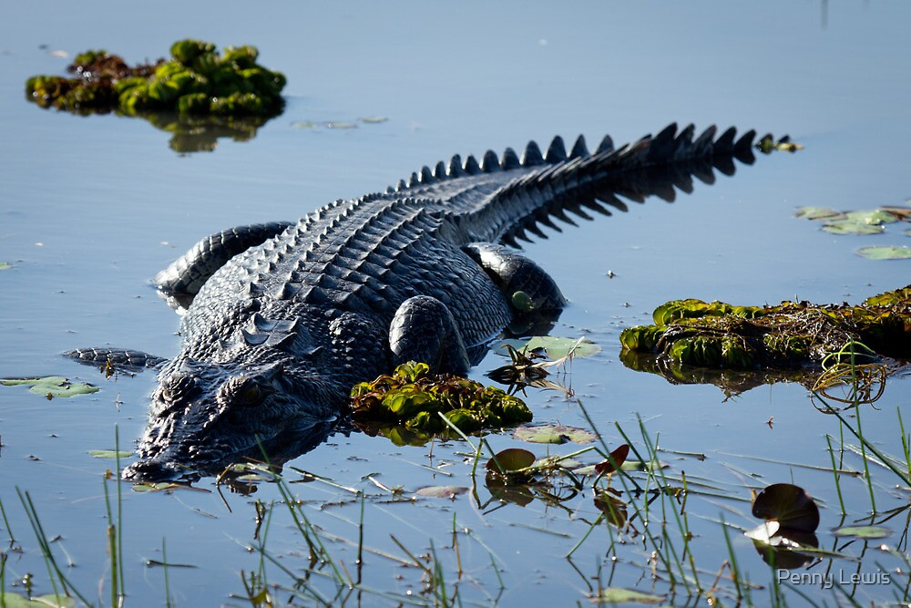 Lurking Croc by Penny Lewis