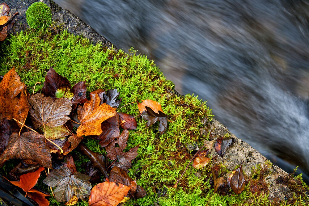Autumn Leaves and Rushing Water by Ellesscee