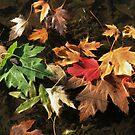 Fallen Leaves by Marija