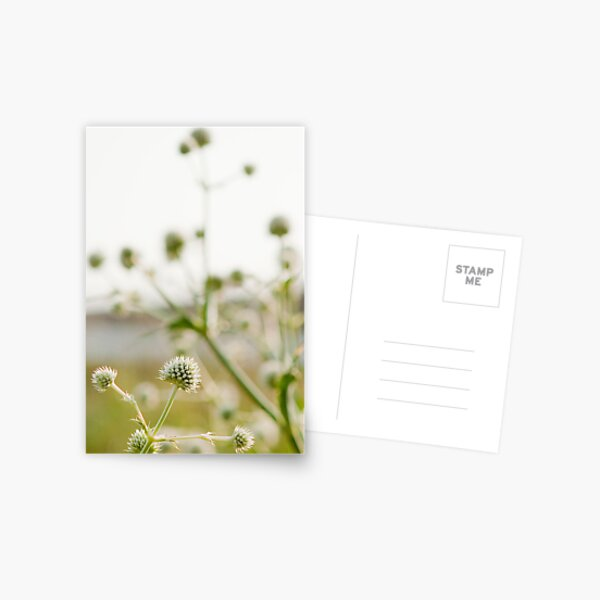 Highline Flowers Postcard