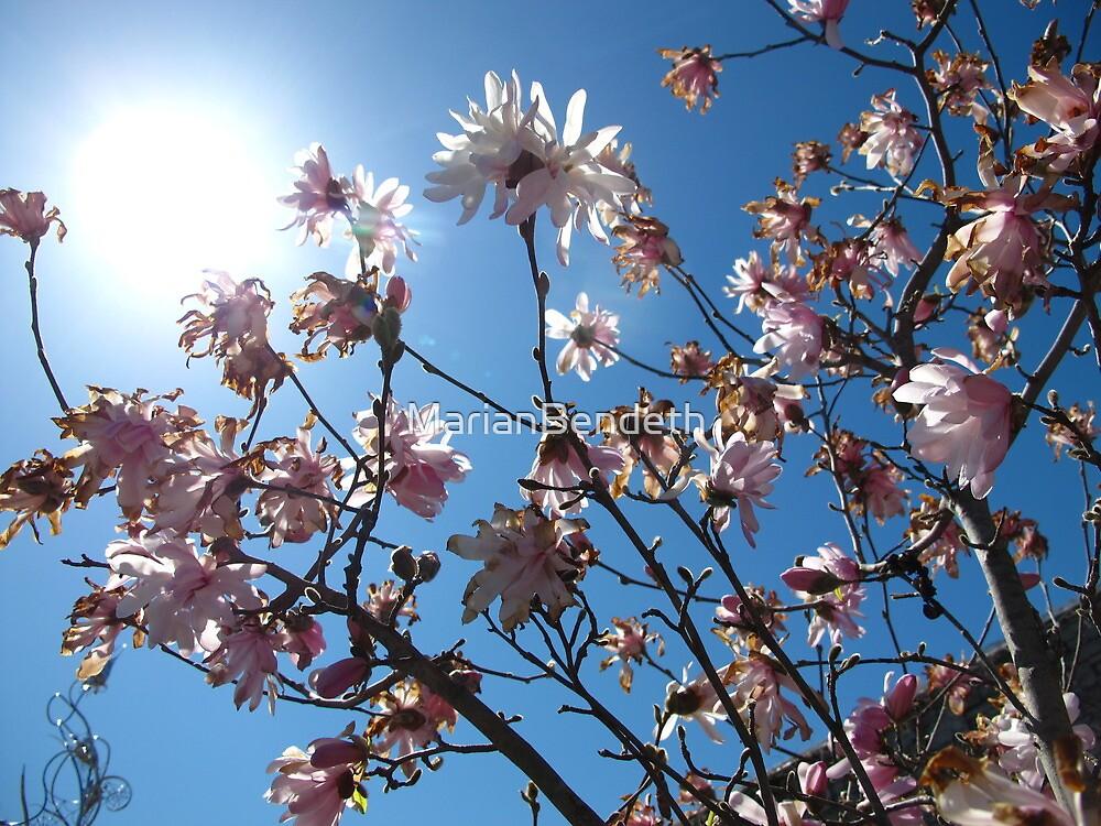 Sunnyy Magnolia Days by MarianBendeth