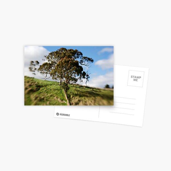 Gum Tree  Postcard