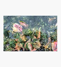 Conch Shells at Montagu Beach in Nassau, The Bahamas Photographic Print