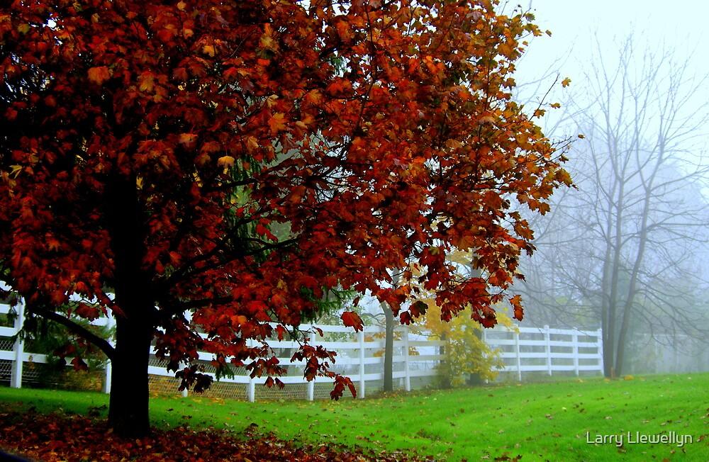 A Study in Fog............ by Larry Llewellyn