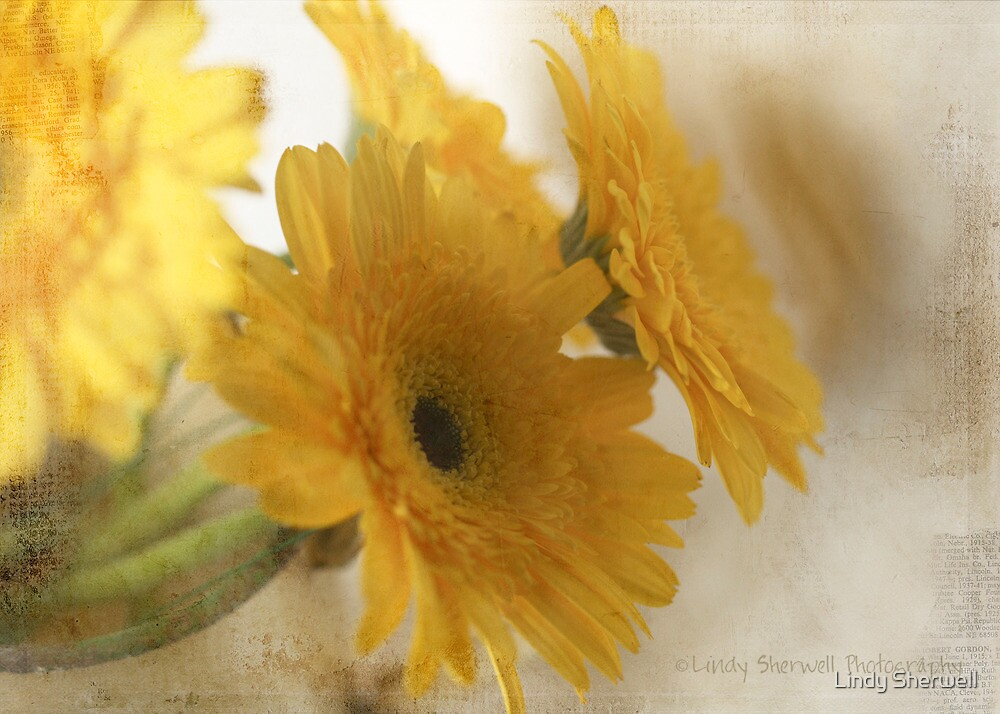 like sunshine by Lindy Sherwell
