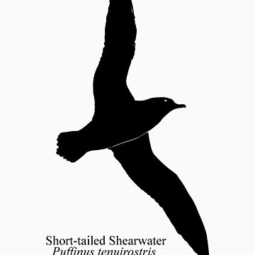 Short Tailed Shearwater - Scientific Name by littleredplanet