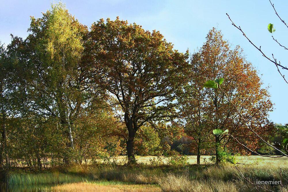 Golden Autumn Trees by ienemien