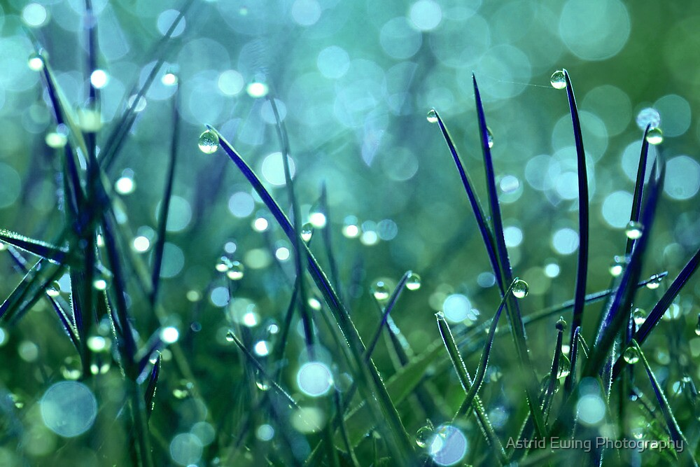 Fairy Drops Blue/Green by Astrid Ewing Photography