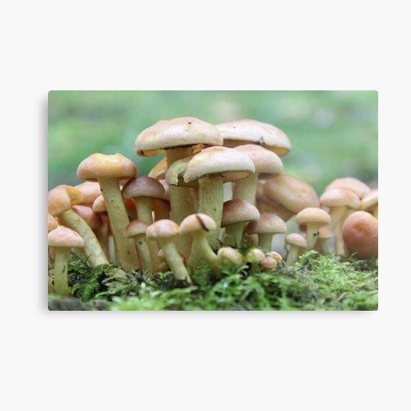 A Crowd of Mushrooms Metal Print