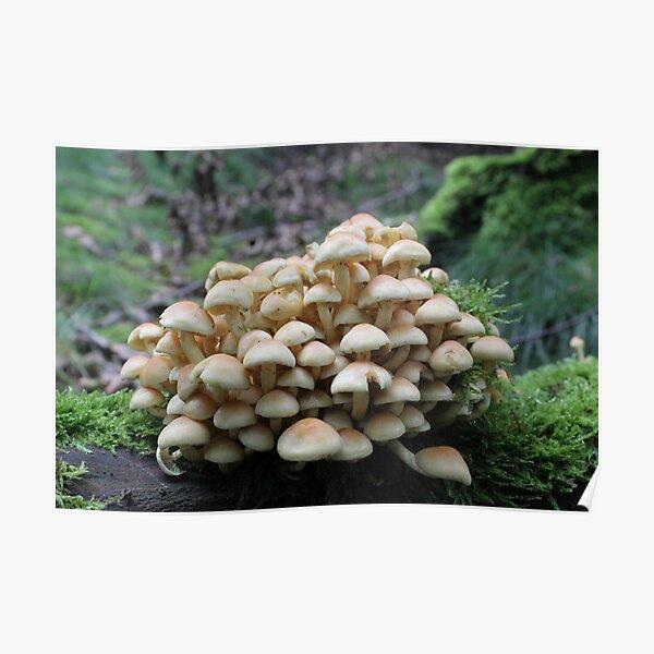 Mushroom Mound Poster