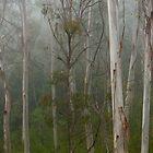 misty gum trees by Martin  Hoffmann