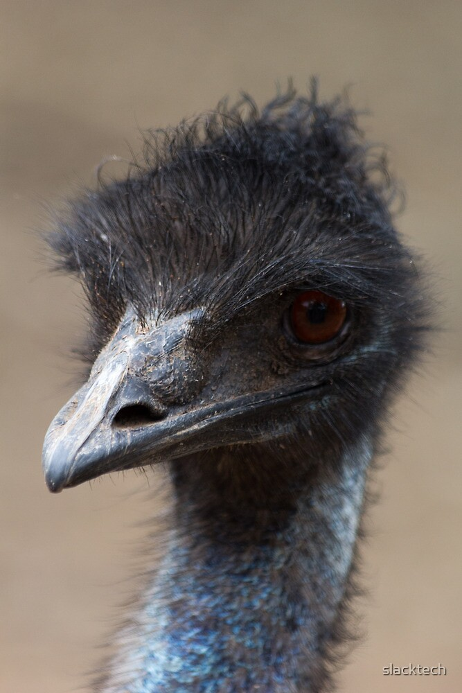 Emu No. 1 by slacktech
