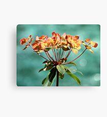 Euphorbia Leinwanddruck