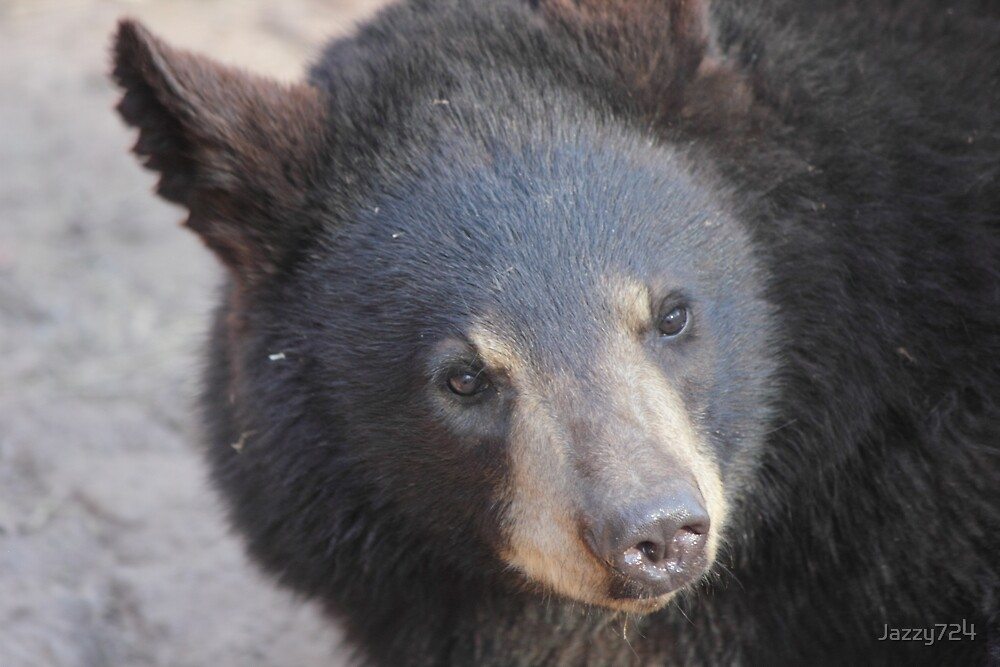 North American Black Bear by Jazzy724
