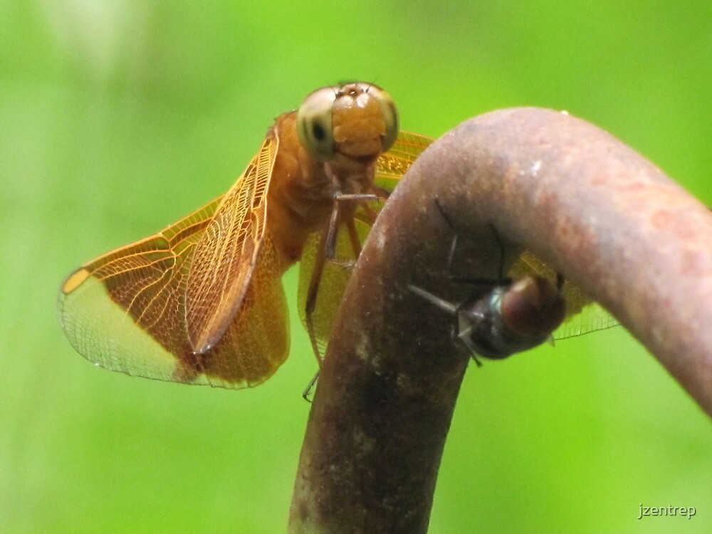 Dragonfly by jzentrep