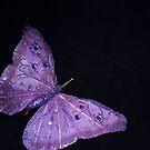 Silken Butterfly by Jazzy724