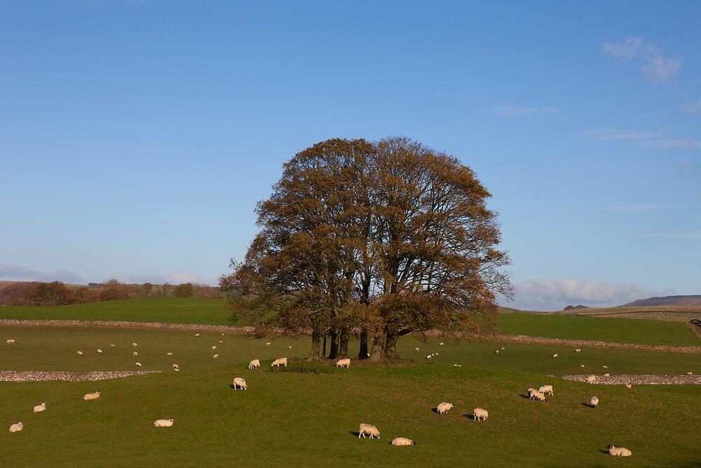 Malham Trees by Nick Atkin