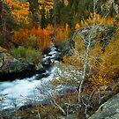 High Sierra Magic by Thomas Dawson