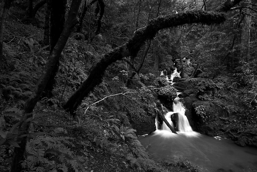 Cataract Falls, Marin County by Scott Sawyer