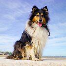 puppy :) by BellatrixBlack
