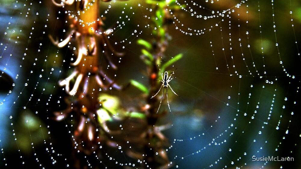 Spider and dew drops by SusieMcLaren