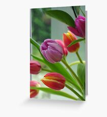 Tulip Multi Greeting Card