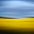 Yellow field with blue sky by Phillip Shannon