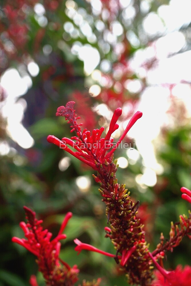 Red blossom burst by ♥⊱ B. Randi Bailey