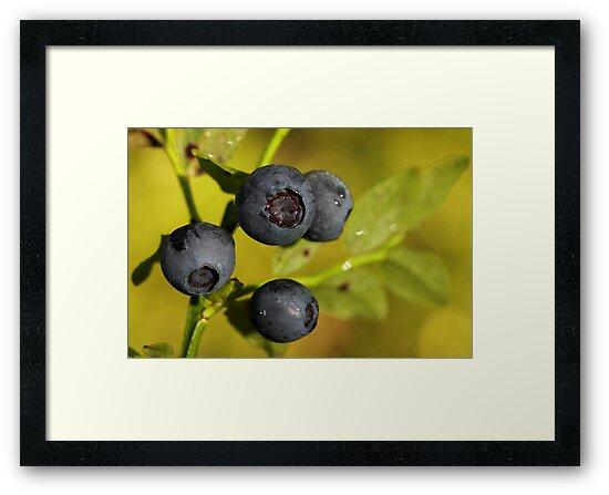 Wild Blueberries by Irina Chuckowree