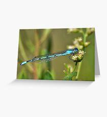 Azure Bluet Damselfly Greeting Card