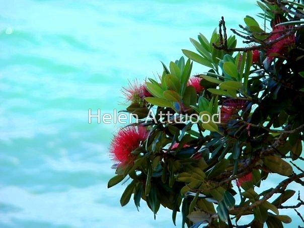 Pohutakawa Flowers, New Zealand by Helen Attwood