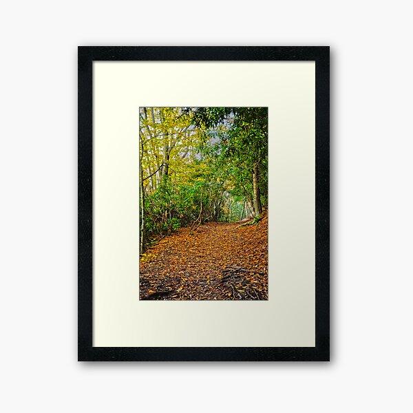 Along the Hawk Falls Trail Framed Art Print