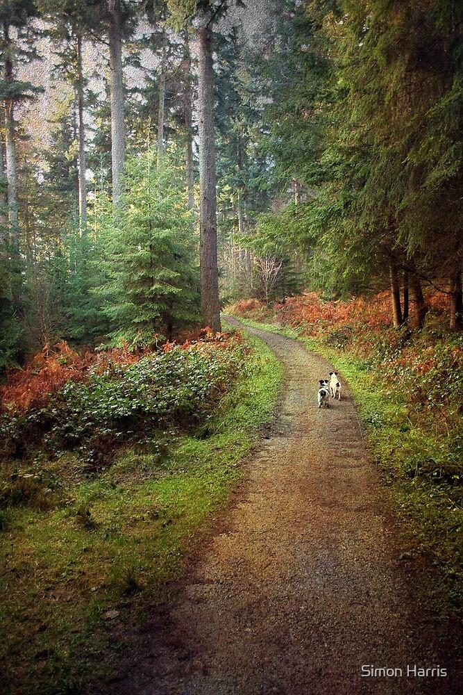 Forest Walk by Simon Harris