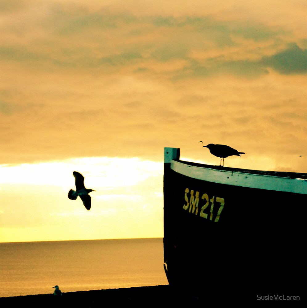 Seagull and docked boats in the sunset\