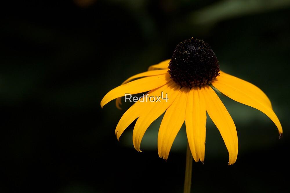 Burst of yellow by Redfox4