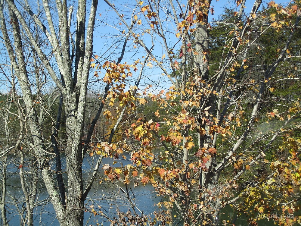 Trees and lake in the Fall by AliciaHarvey