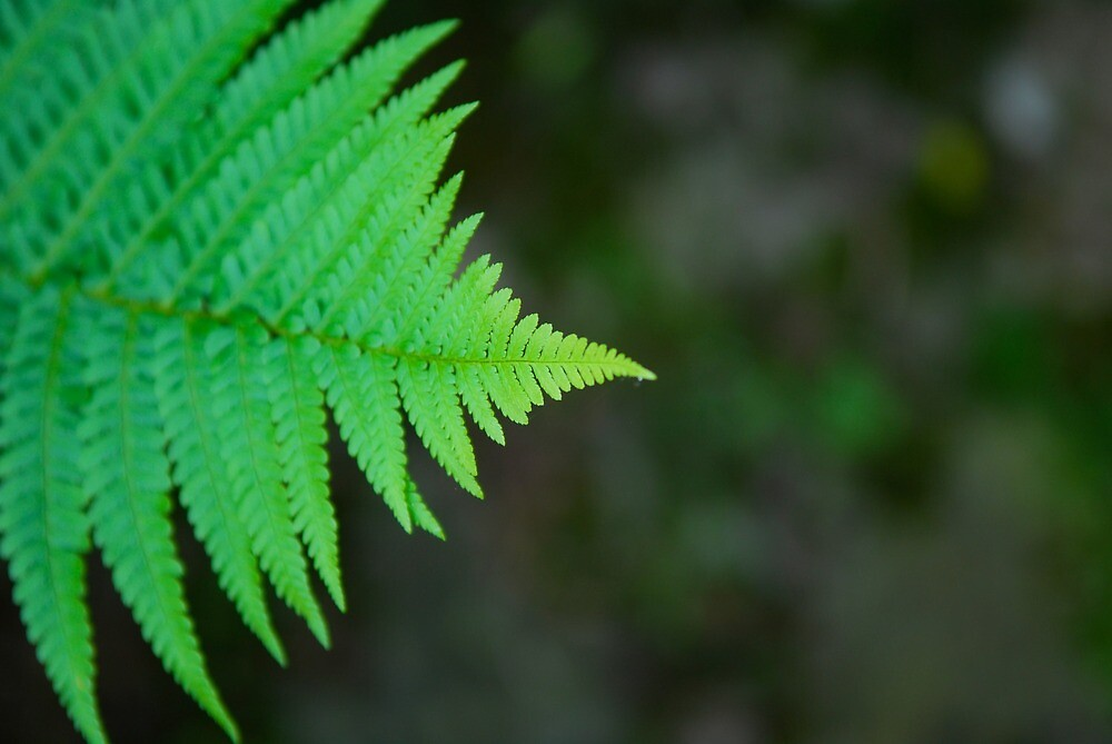 Fern Frond | Normandy, France by rubbish-art