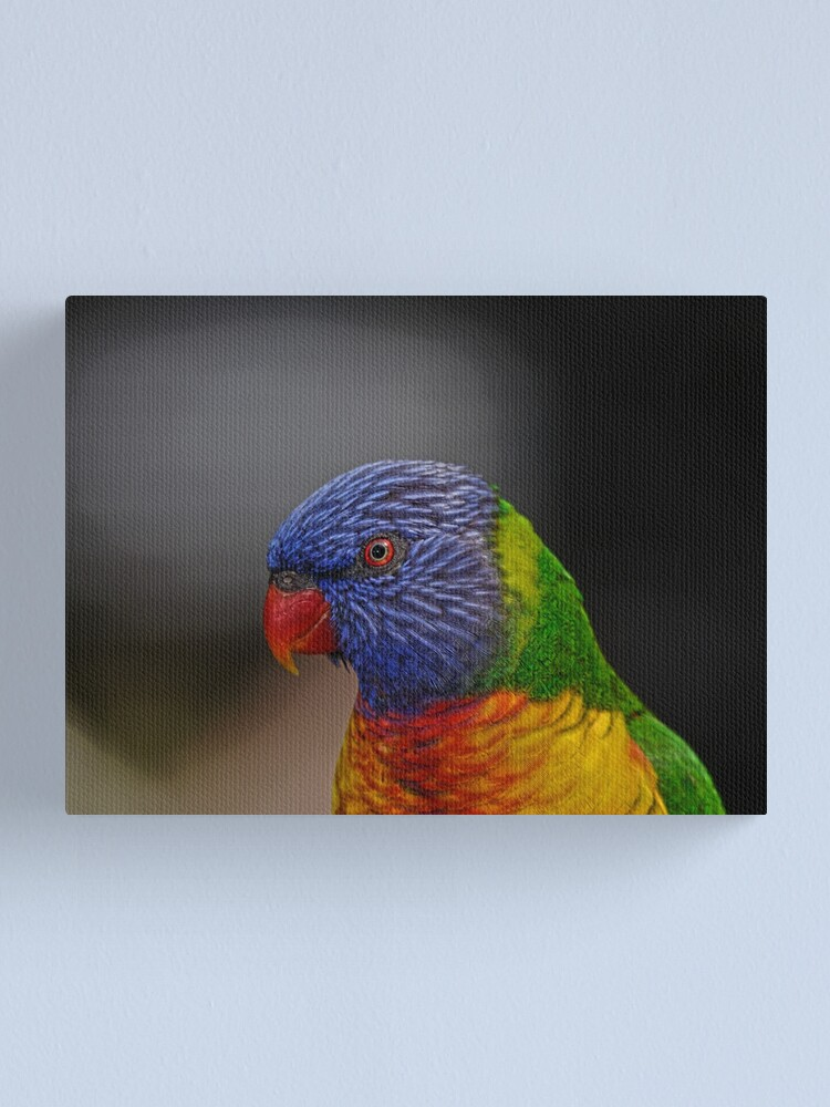 Alternate view of Rainbow Lorikeet portrait Canvas Print