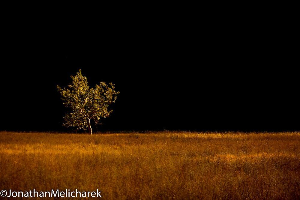 Amber field by Jonathan Melicharek