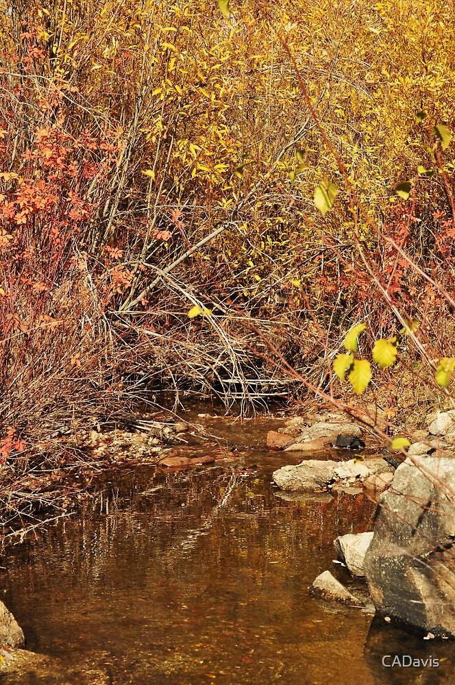 Stream in Autumn by CADavis