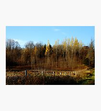 End of Fall........ Photographic Print