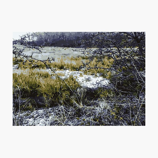 Frost Forest  Photographic Print