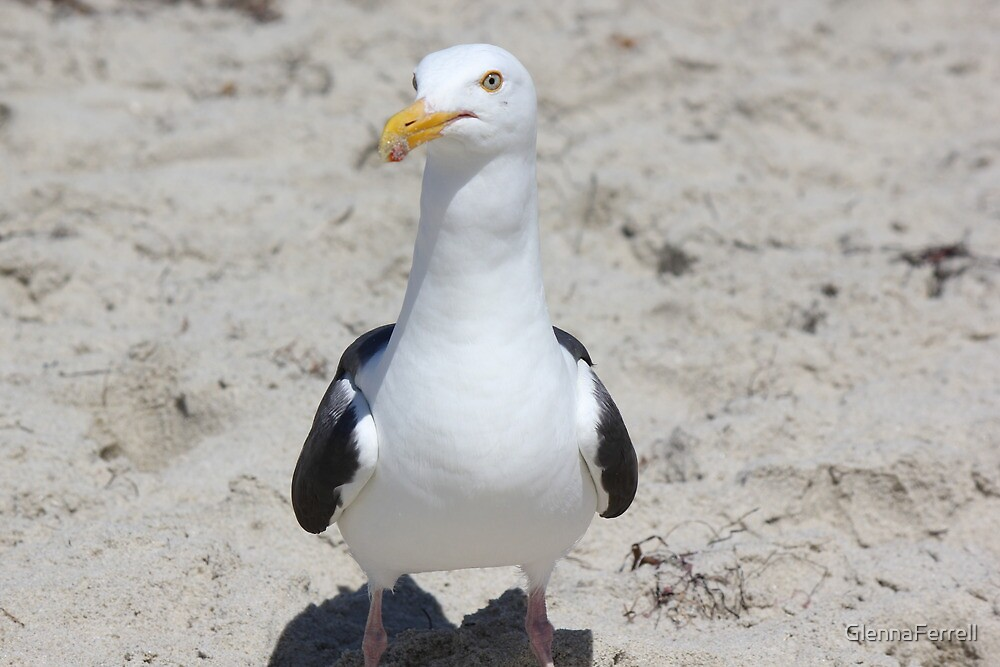 Seagull at the beach by GlennaFerrell