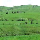 Green Hills by jlv-